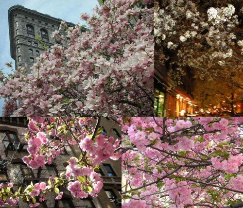 Morningside Heights, Flatiron District, NYC (April 2010)